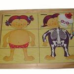 Картинки разрезные Анатомия /01019/РнТойс