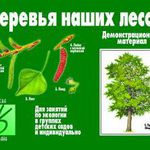 Деревья наших лесов/01629/ВД